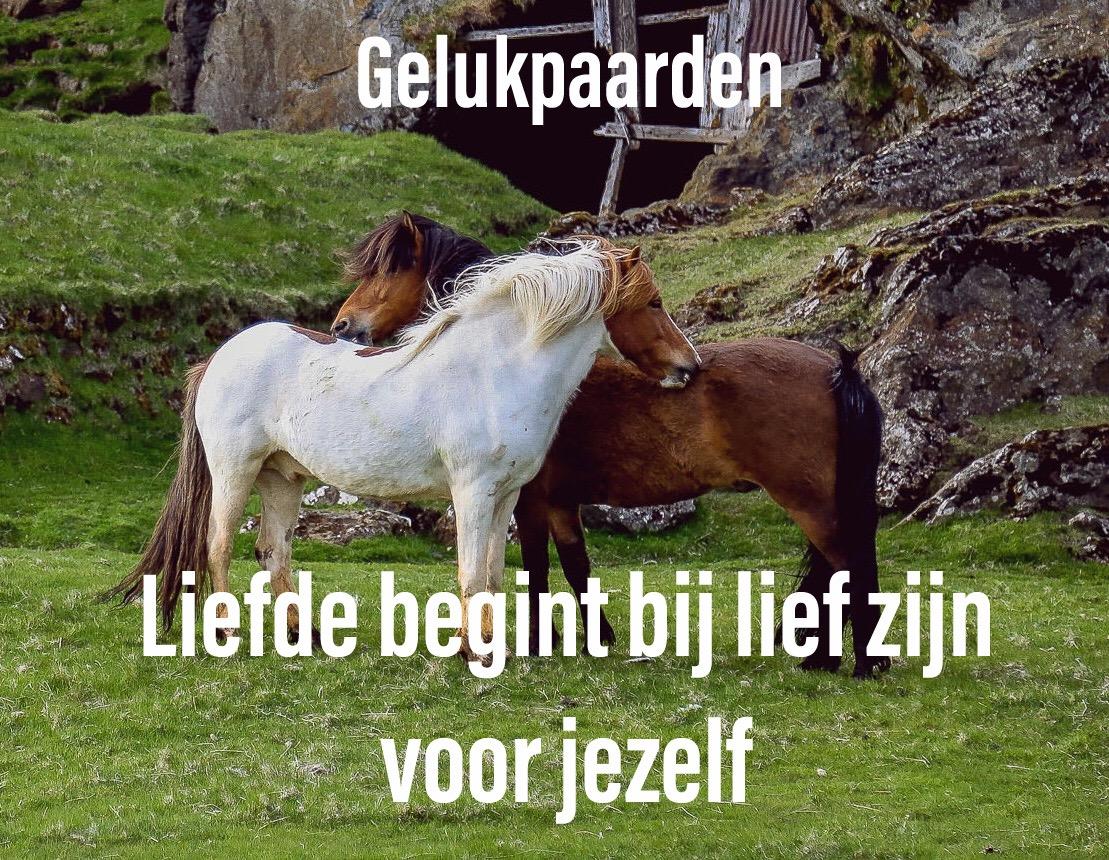 paardencoach Gelderland