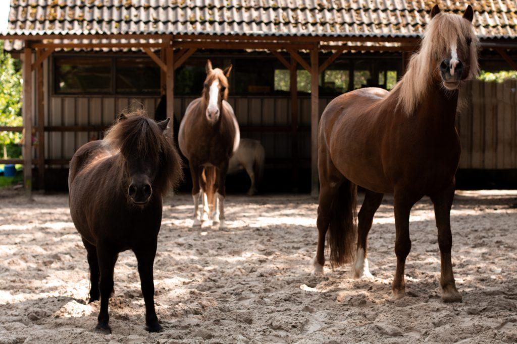 Paardencoaching Gelderland