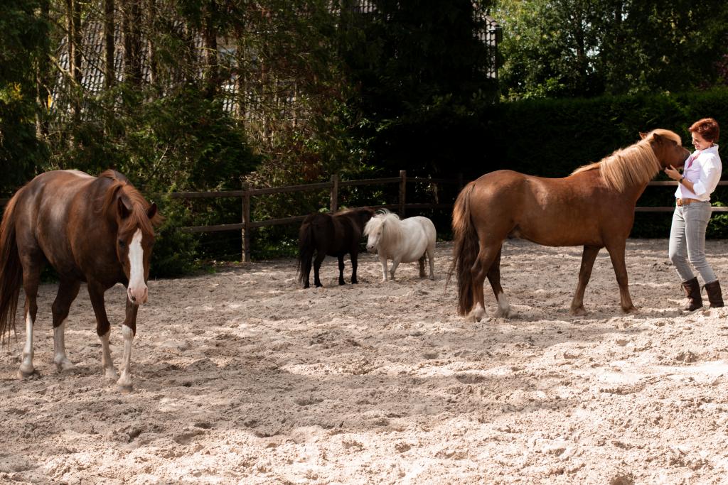 Paardencoaching Gelderland Apeldoorn