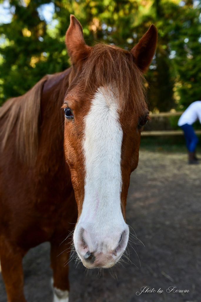 paardencoach Apeldoorn Gelderland