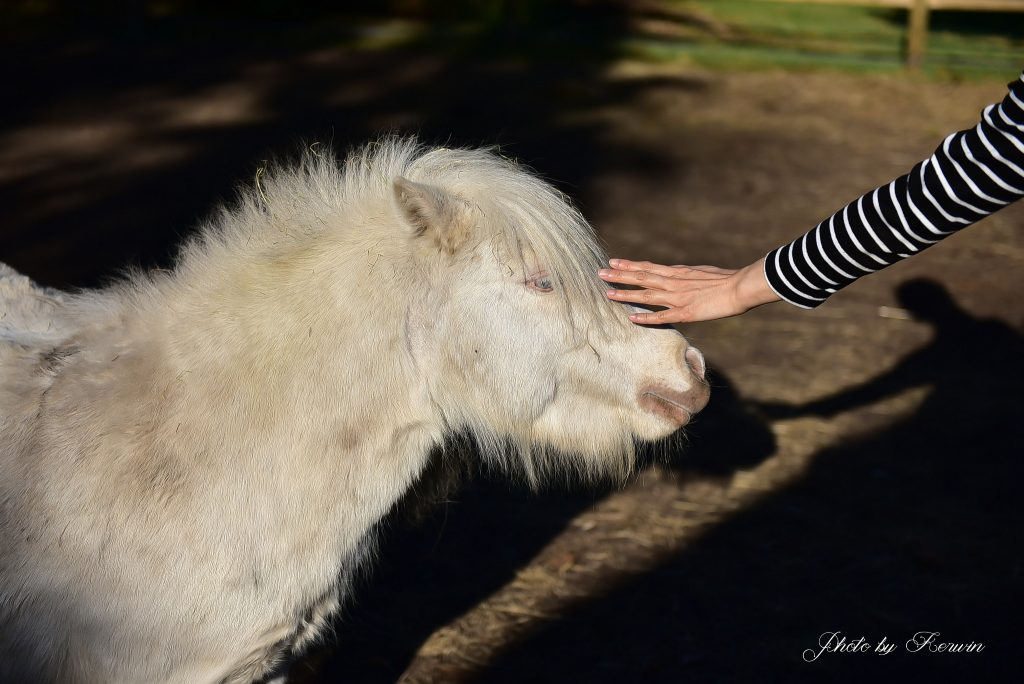 paardencoacpaardencoach Apeldoorn Gelderlandh Gelderland
